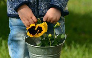 Blog loisir créatif avec les mini plantations